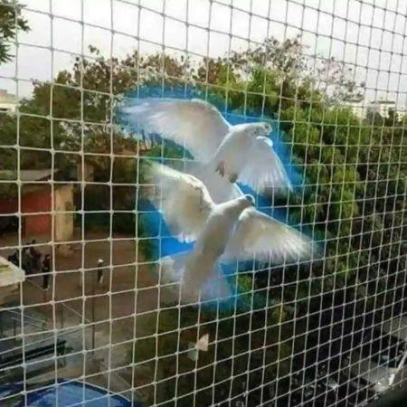 ΕΙΔΙΚΟ ΔΙΧΤΥ 10 X 10 ΑΠΩΘΗΣΗΣ ΠΤΗΝΩΝ - ANTI BIRD NET 100ΤΜ - skroutz.com.cy