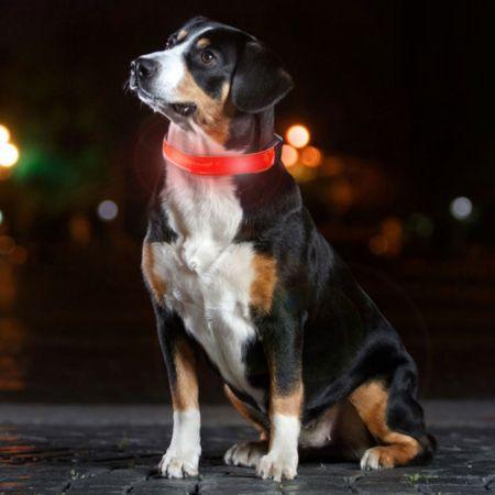 Led Κολάρο για Σκύλους για Ασφαλείς Βραδινές Βόλτες