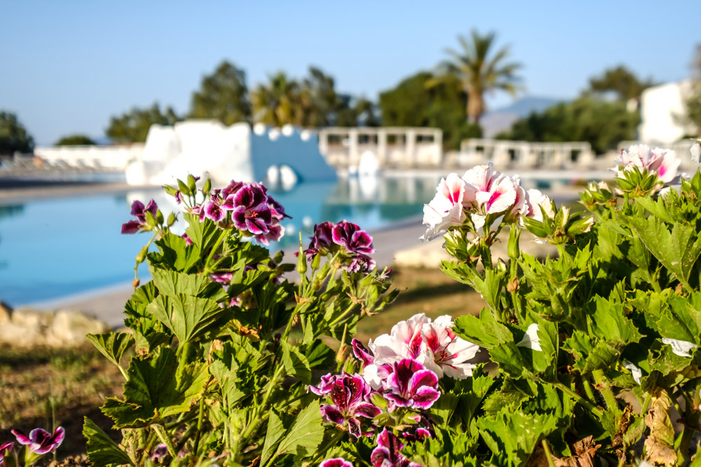 latchi family resort - paphos - whatsoncyprus.co