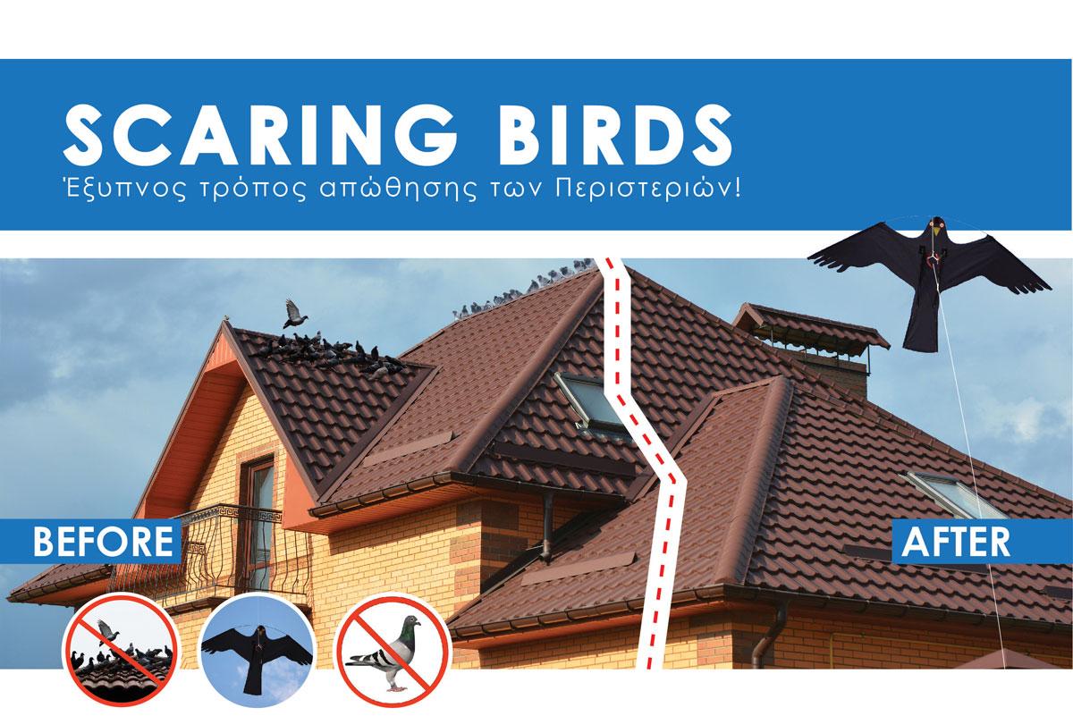 Cyprus Bird Control Pigeon Contol Cyprus scaring bird cyprus
